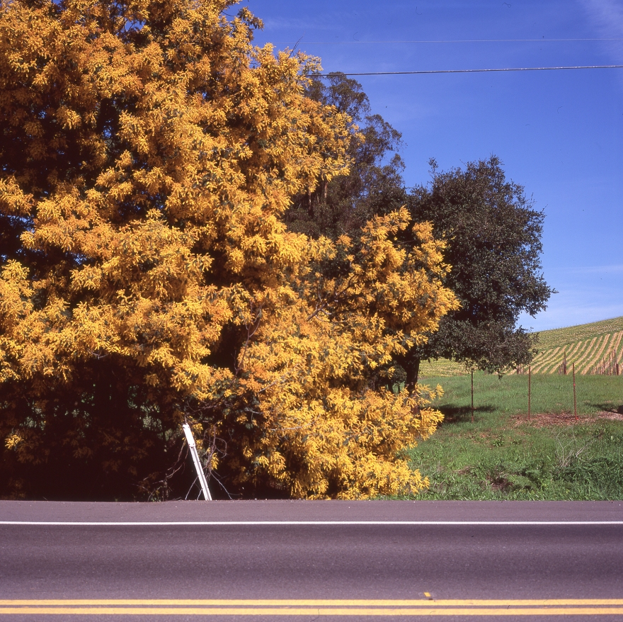lovely yellow foliage